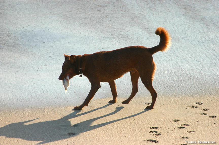 dog beach fish
